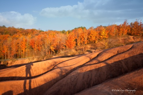 Badlands, Ontario, fall, trees, shadows