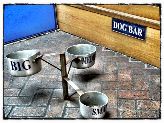 Dog Bar_viewable