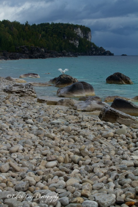 Bruce Peninsula, Tobermory, Bruce Trail, Halfway Log Dump, beach, seagull, landscape