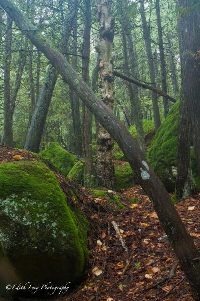 Tobermory, Bruce Peninsula, Ontario, mist, forest, trees, nature