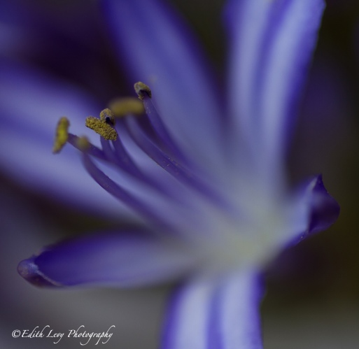 macro photography, flower, purple, delicate