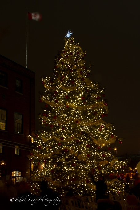 Christmas Tree, Distillery District, Toronto, Ontario, Christmas Market, night