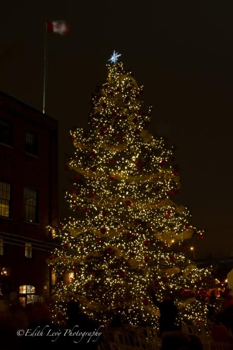 Christmas Tree, Distillery District, Toronto, Ontario, Christmas Market, night