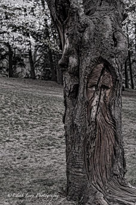 High Park, tree, face, spring, Toronto