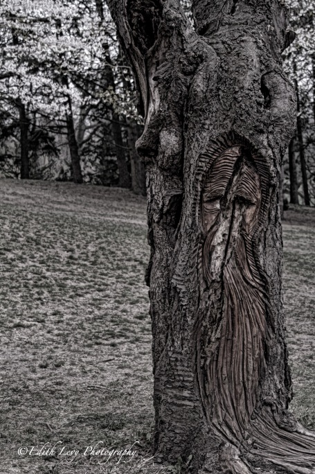High Park, tree, face, spring, Toronto
