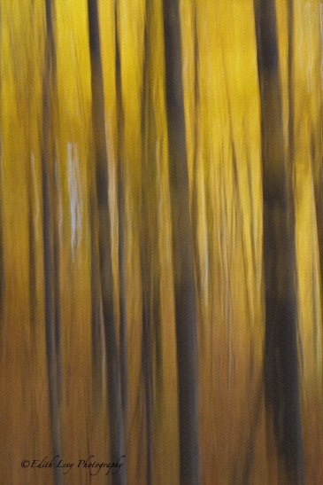long exposure, trees, fall, autumn