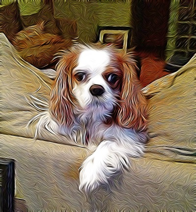 cavalier king charles spaniel, iphoneography, Tangled FX