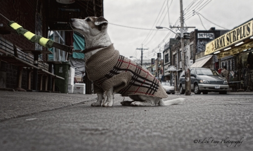 Kensington market, Toronto, city, street, dog, street photography