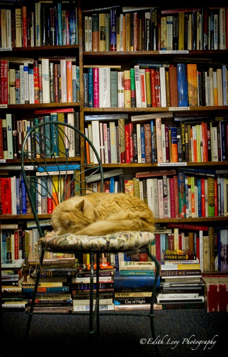 bookstore, cat, books, Boston