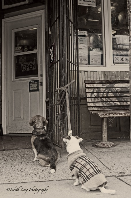 dog, Kensington Market, Toronto, street photography, black and white