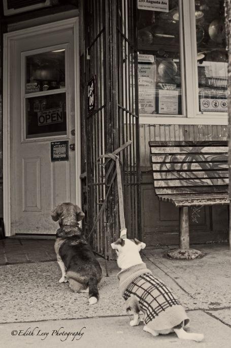 dog, Kensington Market, Toronto, street photography, black and white