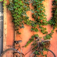 Italy, Rome, Trastevere, bicycle, wall, vines