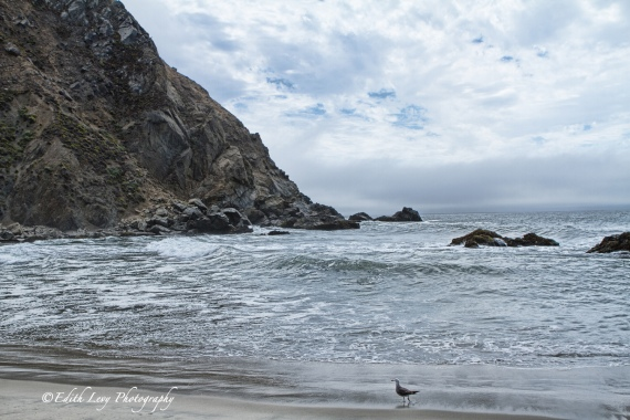 Pfeiffer Beach, California, Big Sur, sea, water, rocks, seagull, rolling waves, travel photography
