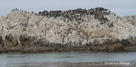 California, Pebble Beach, 17 Mile Drive, Bird Rock, birds, sea, pacific coast, travel photography