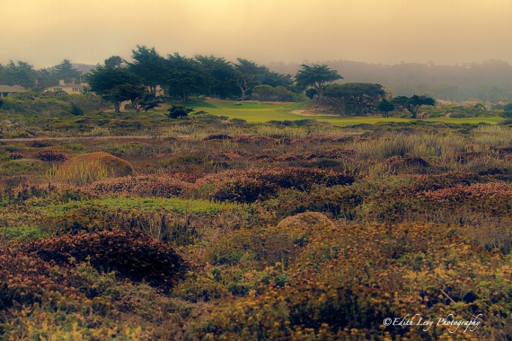 China Rock, 17 Mile Drive, Pebble Beach, Carmel, California, golf course, fog, travel photography
