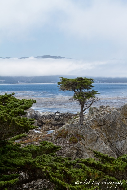 Lone Cypress, 17 Mile Drive, Pebble Beach, Carmel, California, tree, Monterey Cypress, overlook, pacific ocean, fog, clouds, travel photography