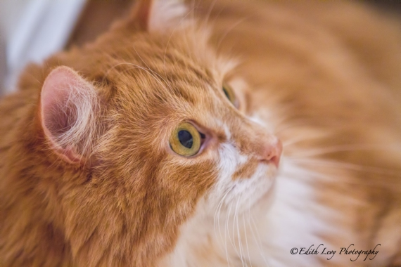 cat, whiskers, portrait, pet photography, kitty,