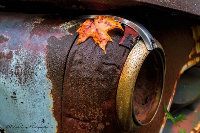 headlight, rust, vintage, car, fall, autumn, maple leaf, Ontario, Rockwood Autoyard