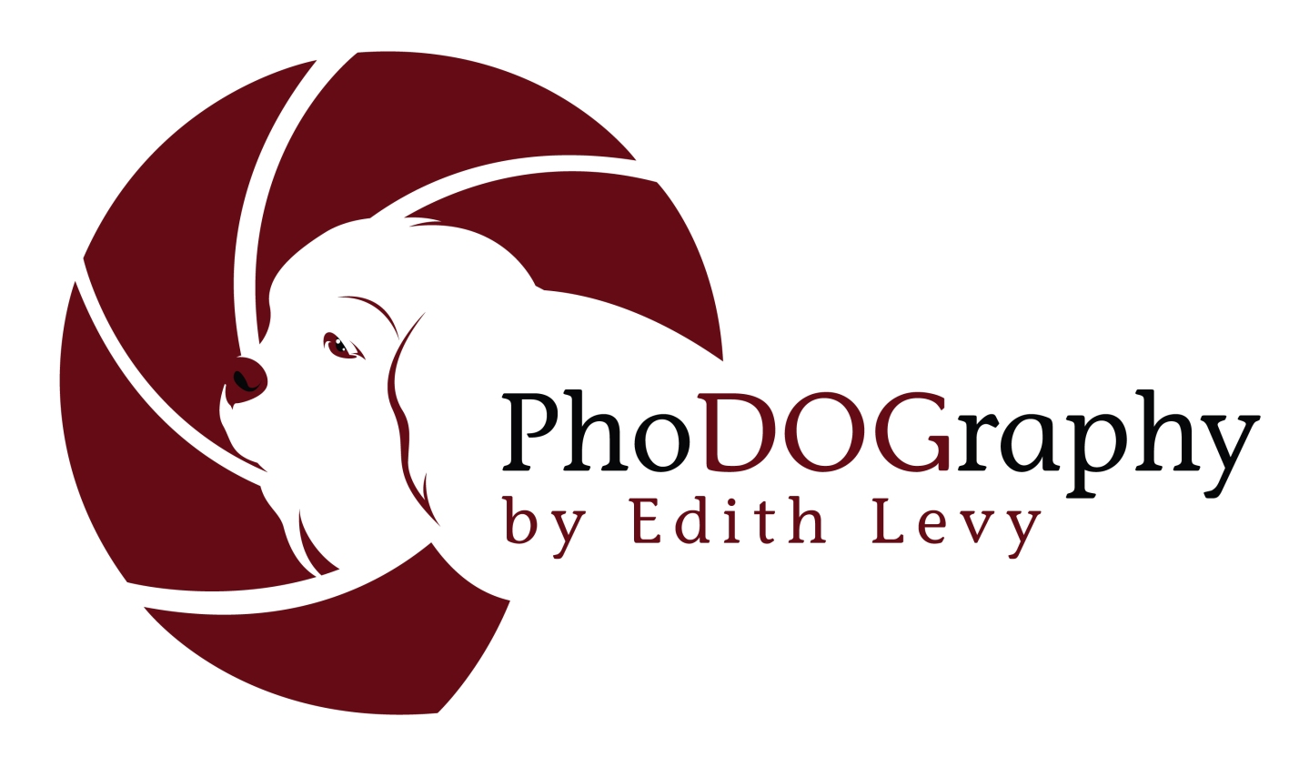 pet photography, PhoDOGraphy by Edith Levy, logo, Toronto Pet Photographer