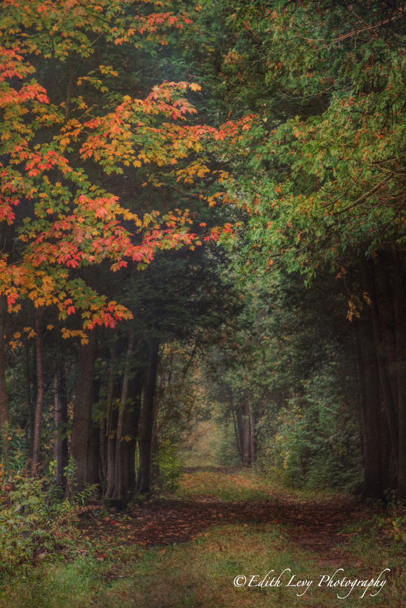 Ontario, forest, path, autumn, fall, changing colours, trees, fine art, texture, fog