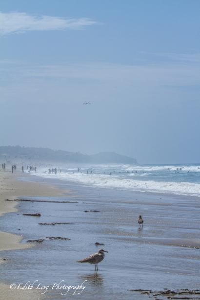Zuma Beach, California, Los Angeleas, mist, sea, pacific ocean, seagulls, sand, waves