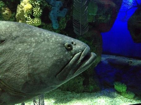 Ripley's Aquarium, Toronto, Ontario, fish, water, attraction,