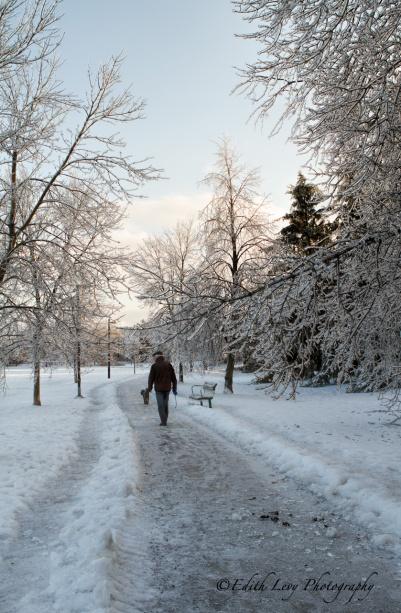 Ice Storm, Toronto, 2013, park, ice, trees, branches, pathway,