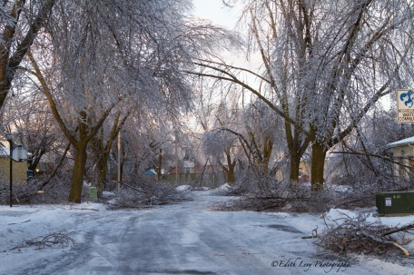 Ice Storm, Toronto, 2013, park, ice, trees, branches, road, broken