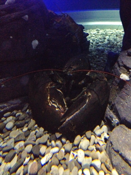 Ripley's Aquarium, Toronto, Ontario, fish, water, attraction, lobster