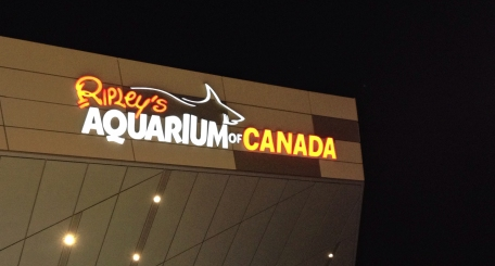 Ripley's Aquarium, Toronto, Ontario, fish, water, attraction, sharks,