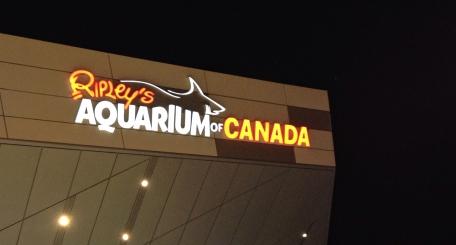 Ripley's Aquarium, Toronto, Ontario, fish, water, attraction, sharks,