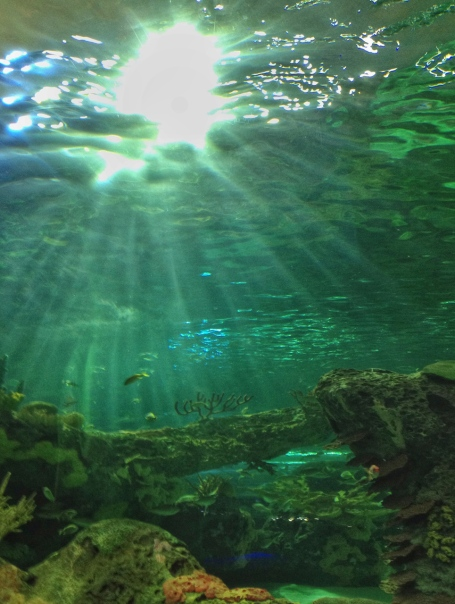 Ripley's Aquarium, Toronto, Ontario, fish, water, attraction, under the sea