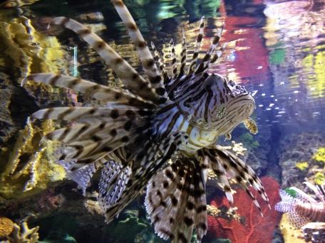 Ripley's Aquarium, Toronto, Ontario, fish, water, attraction, zebra fish