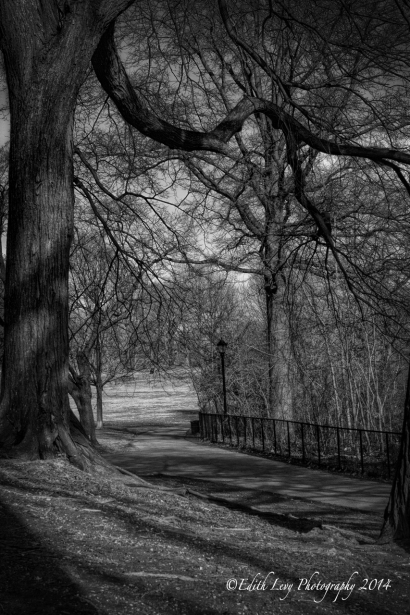 Brooklyn, Prospect Park, trees, path, canopy, walkway, black and white, monochrome, nature