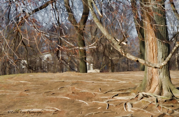 Prospect Park, Brooklyn, New York, trees, house, Topaz Simplify
