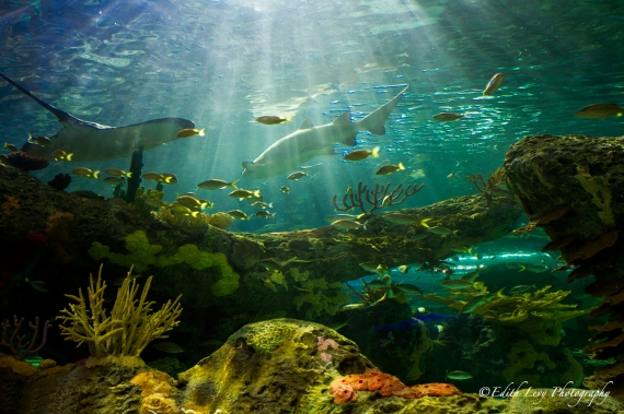 Toronto Aquarium, Ripley's Aquarium of Canada, Dangerous Lagoon, shark, fish, water, tank, coral, under water