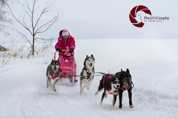 cannington, Dog Sled Races, Ontario, mush, musher, snow dogs, siberian husky, winter sport, snow,