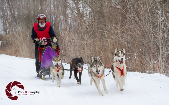 Dog sled race, Cannington, Ontario, Siberian Husky, Huskies, snow, race, sled, Pet Photography, Toronto Pet Photographer