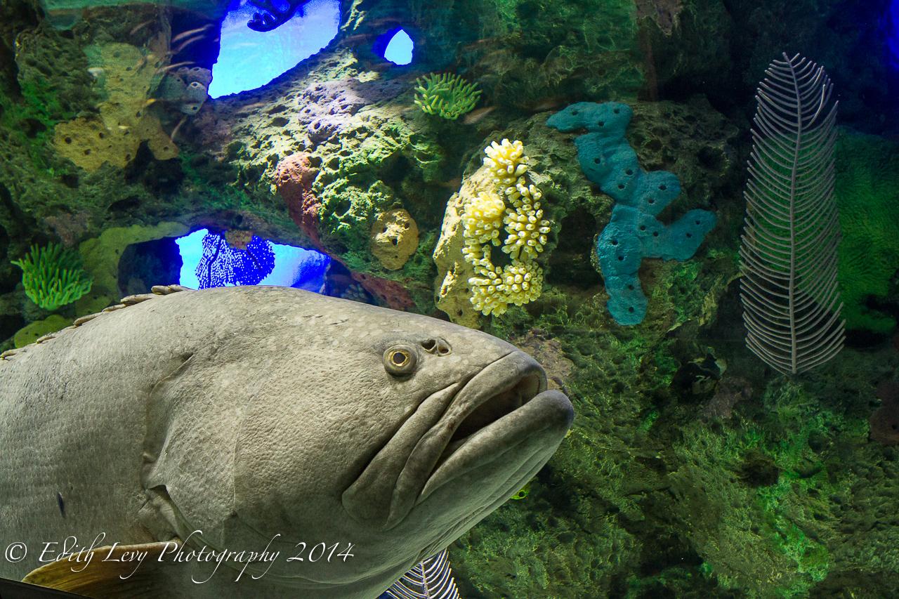 Ripley's Aquarium, Toronto, tank, fish, water, underwater, Toronto attractions, Topaz DeNoise