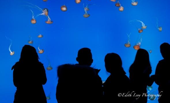 Ripley's Aquarium, Toronto, attraction, jellyfish, jellies, silhouette, water, blue