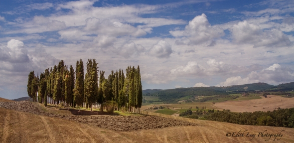 Cypress Trees, San Quirico D'Orcia, Italy, hills, Tuscany, travel photography