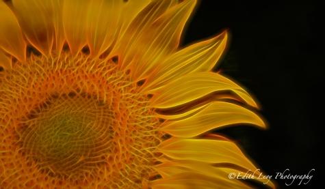 Topaz Glow, Topaz Labs, sunflower, flower