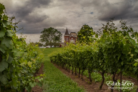 Niagara on the Lake, Ontario, vineyards, grapes, wine, victorian house, escarpment