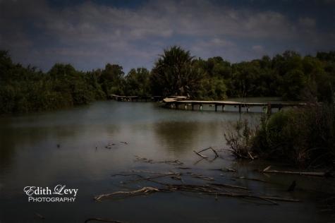 Israel, Ein Afek, nature reserve, path, bridge, lake, fine art