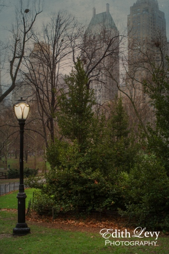 New York, Manhattan, Central Park, path, trees, light post, rain, texture, buildings