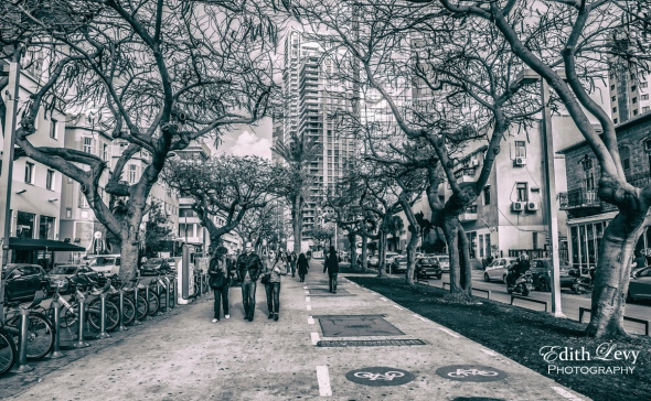 Tel Aviv, Israel, Rothschild Blvd, walking, path, trees, bike lane, black & white, monochrome