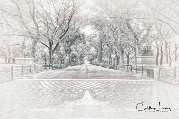 New York, Central Park, Literary Walk, black and white, high key, trees, bench, travel photography