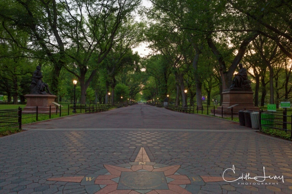 New York, Central Park, Literary Walk, travel photography, trees, benches