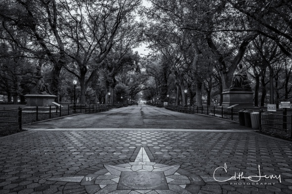 New York, Central Park, Literary Walk, black and white, travel photography, trees, bench