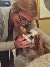 Cavalier King Charles Spaniel, CKCS, CKC, Toronto Pet Photographer, dog, spaniel,
